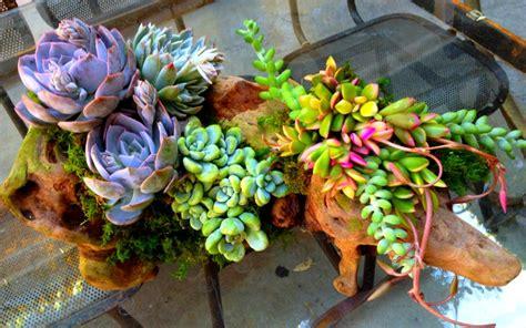 patio style unusual planters   unique materials