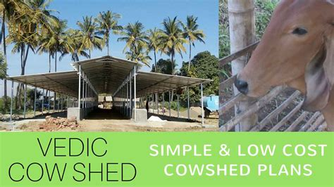 Dairy Cow Shed Design - cattle shed design cow shed planning kl gurukul