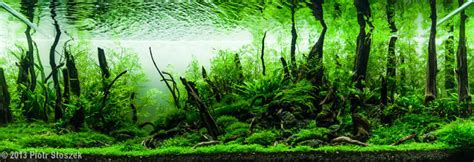 Aquascape Forest by Getting Started With Aquascaping Aquascaping