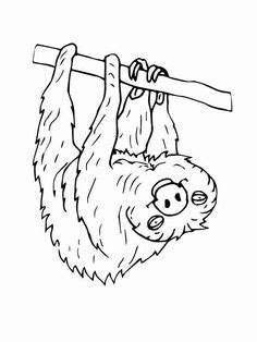 Three-Toed Sloth Coloring Page | Coloring pages, Three