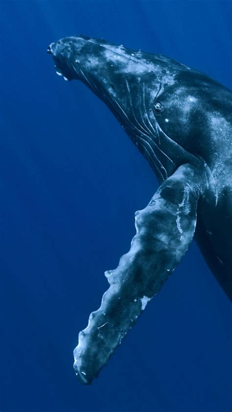 wallpaper whale underwater  diving sites animals