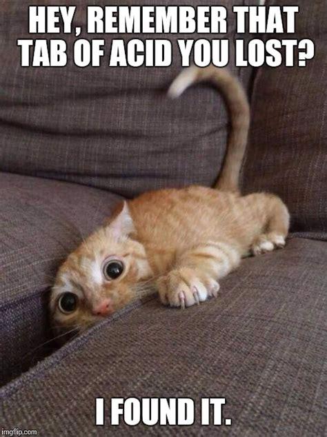 Lost Cat Meme - crazy cat imgflip
