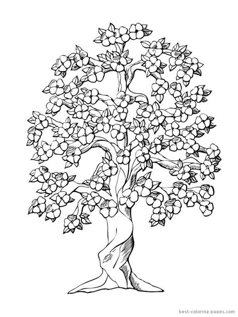 Cherry Blossom Tree | Coloring | Flower coloring pages, Tree coloring page, Adult coloring pages
