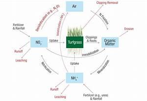 Diagram For Nitrogen Cycle