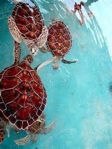 Sea Turtle Water