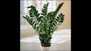 Grünpflanzen Für Dunkle Räume : die ideale pflanze f r dunkle r ume youtube ~ Michelbontemps.com Haus und Dekorationen