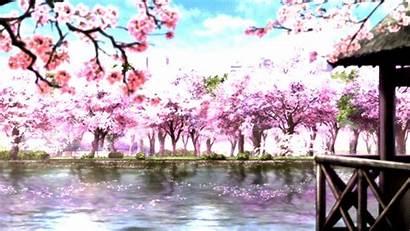 Anime Gifs Pretty Cherry Blossoms Scenery Paisajes