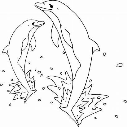 Dolphin Outline Dolphins Jumping Clipart Silhouette Cartoon