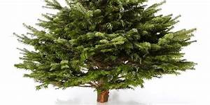 Weihnachtsbaum Kaufen Künstlich : echter weihnachtsbaum nordmanntanne online kaufen weihnachts city ~ Markanthonyermac.com Haus und Dekorationen