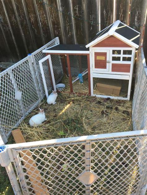 advantek the stilt house rabbit hutch 17 best images about we