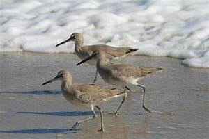Fichier Three Birds Running Jpg  U2014 Wikip U00e9dia