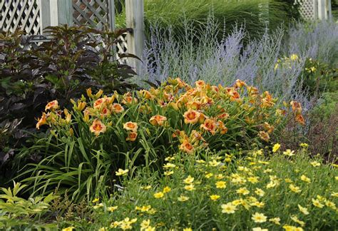 daylilies massachusetts designing with daylilies perennial resource