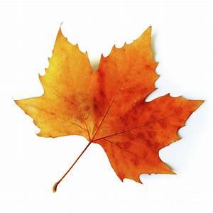 Fall Leaf Photograph by Carlos Caetano