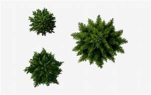 Landscape, Designs, Plants, Furniture, -, Pine, Tree, Plan, Png, -, Free, Transparent, Png, Download
