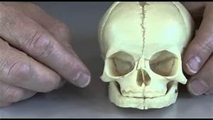 Baby Skull
