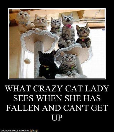 Crazy Dog Lady Meme - best 25 crazy cat lady ideas on pinterest cat lady crazy cat lady meme and crazy cats