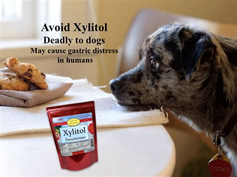 avoid xylitol sweetener deadly  dogs janes healthy