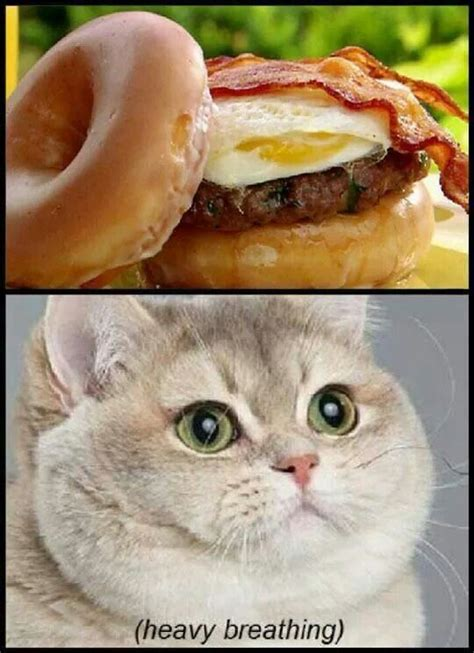 Fat Cat Heavy Breathing Meme - heavy breathing just for laughs pinterest