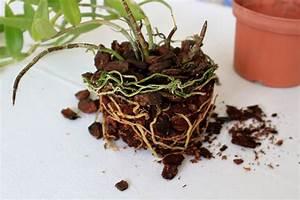 Bausparvertrag Ruhen Lassen Lbs : micha 39 s orchideen semi hydrokultur ~ Lizthompson.info Haus und Dekorationen