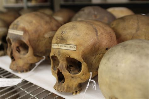A New Take On The 19th-century Skull Collection Of Samuel