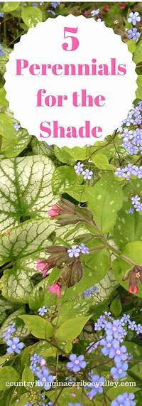 plants for deep shade The Top 5 Prettiest Perennials that will grow in deep ...