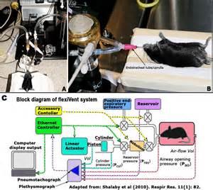 Mpd  Berndt2  Project Protocol