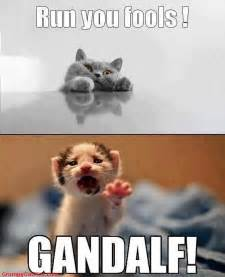 lord of the cats the hobbit the best middle earth memes smosh