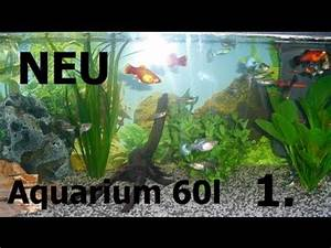 Aquarium Einrichten 60l : my fish neu gestaltetes 60l aquarium fische youtube ~ Michelbontemps.com Haus und Dekorationen