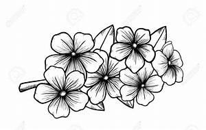 Dessin Fleur De Cerisier Japonais Noir Et Blanc : dessin de fleur en noir et blanc depu vi ~ Melissatoandfro.com Idées de Décoration