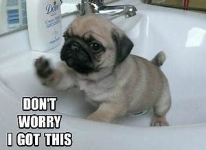 Cute Dog Funny Quotes. QuotesGram