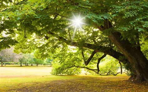 Im Garten Wuchs Der Baum by B 228 Ume Spiegel Deiner Seele Die Linde Garten Europa