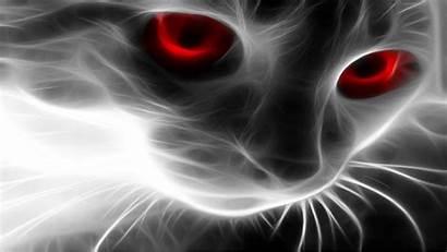 Wallpapers Taringa Cat Backgrounds Widescreen Windows Animals