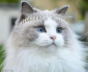 Princess Aurora, the 'world's most beautiful cat' has ...