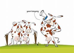 Melkproductie koe - voor een hogere melkproductie bij uw koeien!