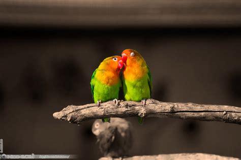 fascinating bird   great photographers