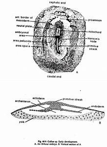 Segmentation In Animals  With Diagram