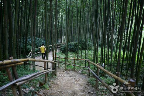 juknokwon bamboo garden official korea tourism
