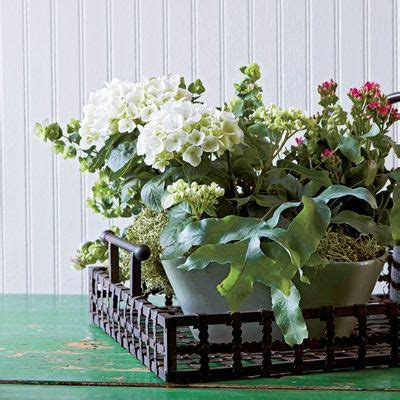 frame your work indoor container gardening ideas