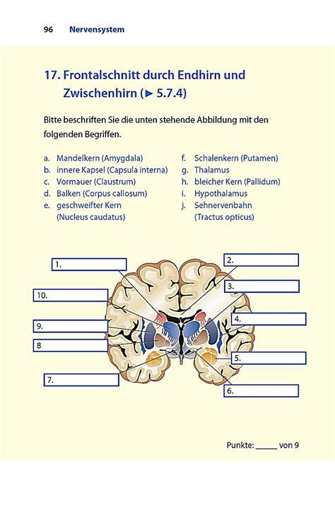 Schilddrüse Anatomie und Physiologie pdf download