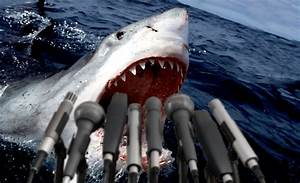 Great White Shark Attack Victim