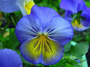 File:Blue and yellow flowers.jpg - Wikimedia Commons