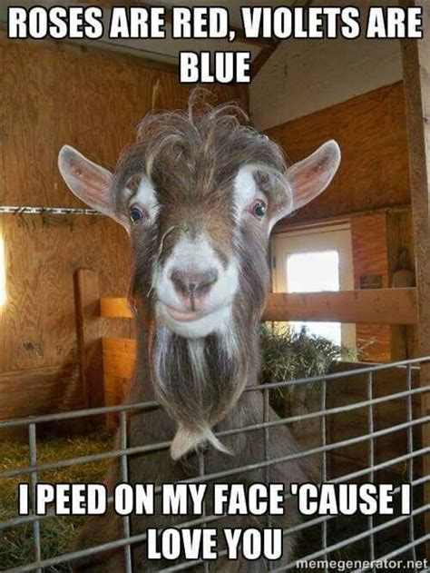 Funny Goat Memes - 2142 best goats images on pinterest farm animals farms and goat