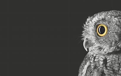 Surface Owl Deviantart Favourites