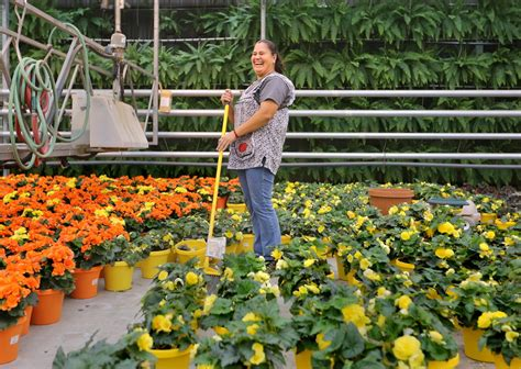 Petitti Garden Centers by How Petitti Garden Center Has Grown By The Numbers
