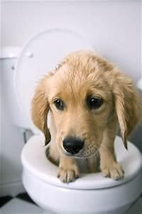 pet health dog constipation