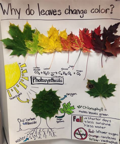 why do leaves change color in fall why do leaves change color in the fall embracing motherhood