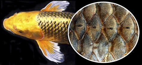 bio lounge osteichthyes peixes osseos
