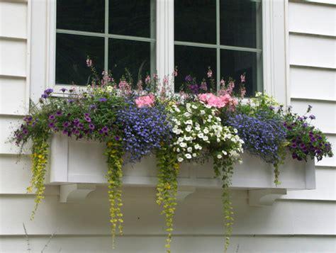 window garden box what size window boxes should you use hooks lattice