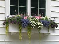 flower boxes for windows What Size Window Boxes Should You Use? - Hooks & Lattice Blog