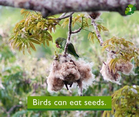 birds can eat seeds